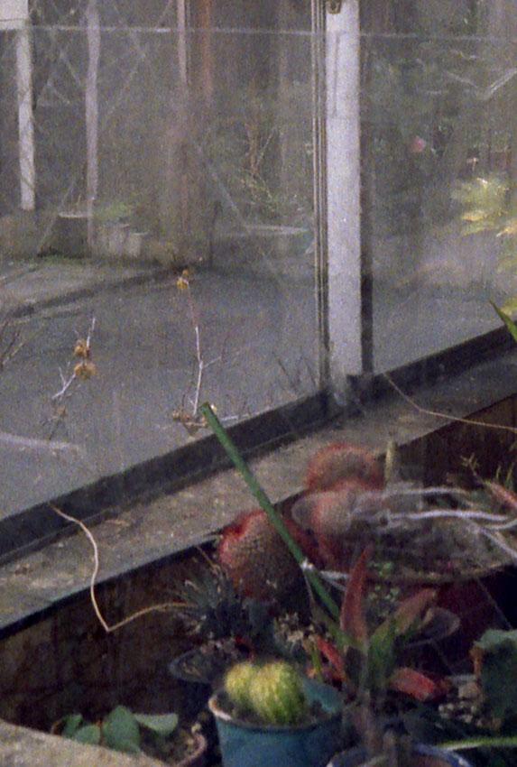 汚れた窓の植物群