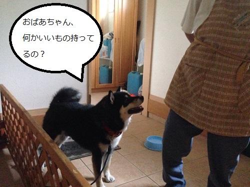 まるちゃん2015062403