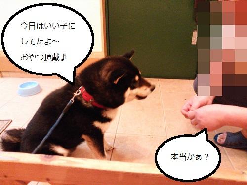 まるちゃん2015062406