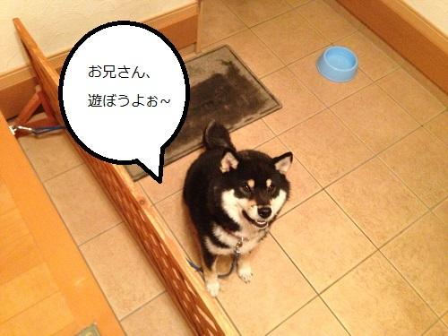 まるちゃん2015062501