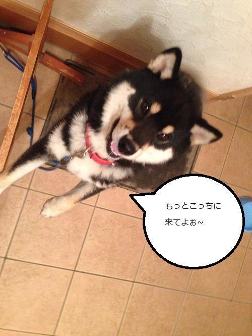 まるちゃん2015062502