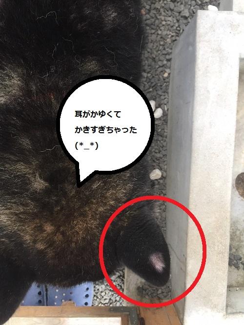 まるちゃん2015072501