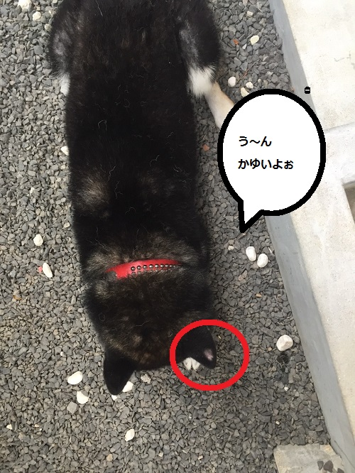 まるちゃん2015072502