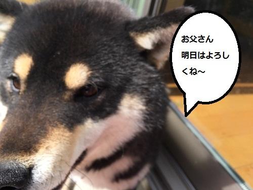 まるちゃん2015072505