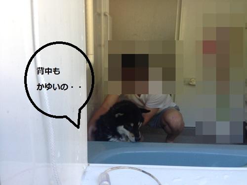 まるちゃん2015072602