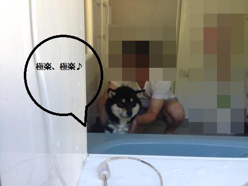 まるちゃん2015072603