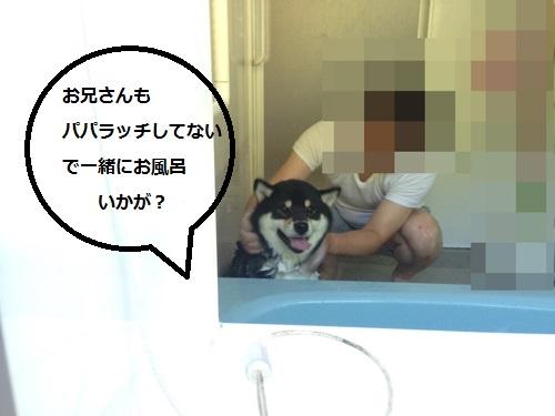 まるちゃん2015072604
