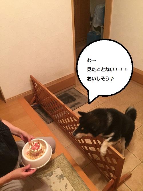 まるちゃん2015072403