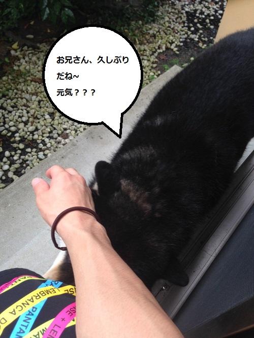 まるちゃん2015072901