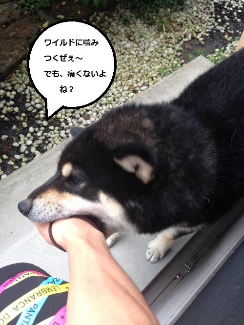まるちゃん2015072904