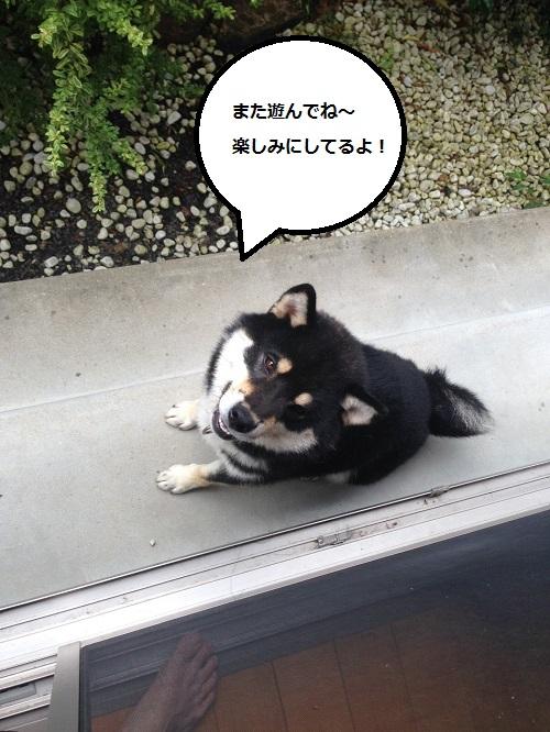 まるちゃん2015072905