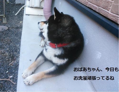 まるちゃん2015073001