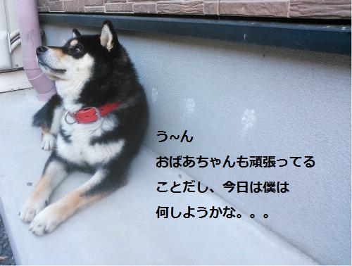 まるちゃん2015073002