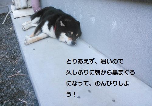 まるちゃん2015073003