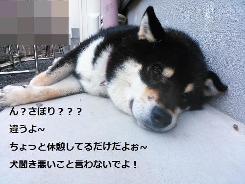 まるちゃん2015073004