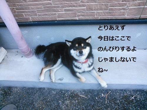 まるちゃん2015073005