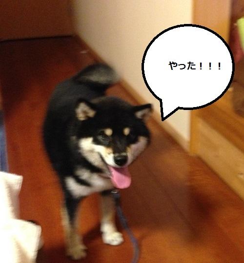 まるちゃん2015073105