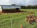 The Farm 8 アロマスクール マッサージスクール オーストラリア