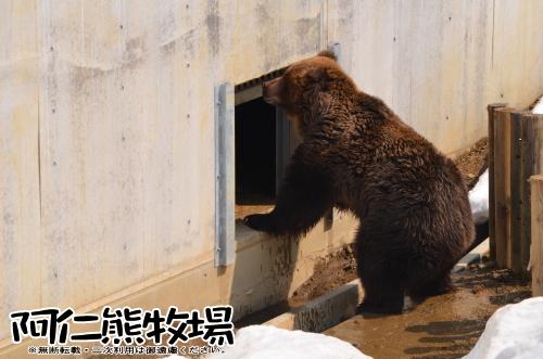 阿仁熊牧場 ヒグマが入らない