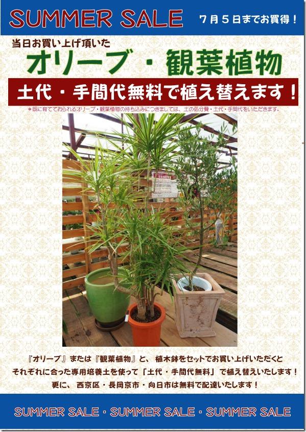観葉植物・オリーブWEB