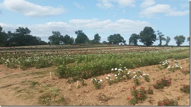 ドリュ農場