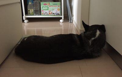 マーヤの寝姿