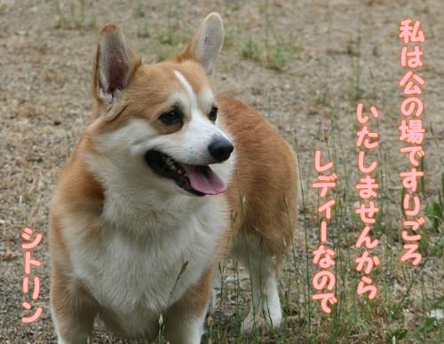 神戸遠征233