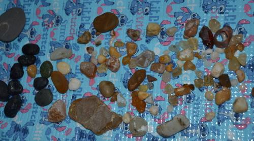 海での収集物