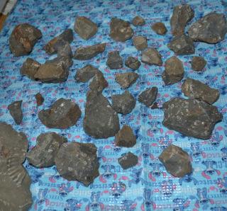 三笠の化石いろいろ