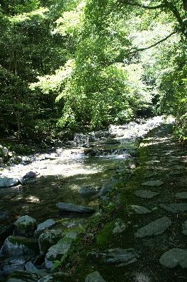 0606飛龍の滝遊歩道