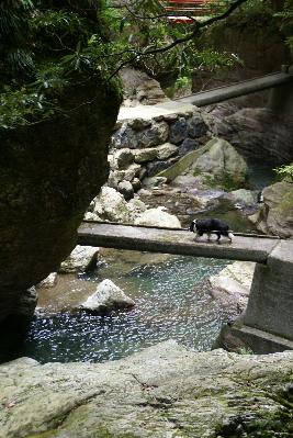 0607-29中津渓谷