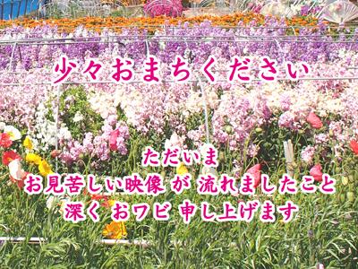 P3167311_201412231558550bd.jpg