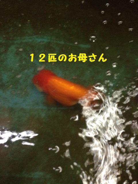 IMG_1550.jpg