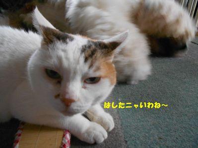 DSCN1193_20150809161923ea9.jpg