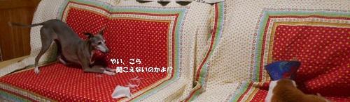 DSCN1161.jpg