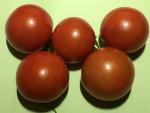 トマト150703