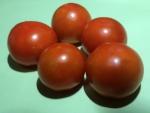 トマト150717