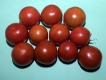 トマト150720