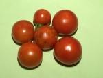 トマト150727