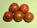 トマト150801