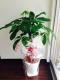 観葉植物も頂きました!!