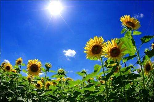 夏の空 ①