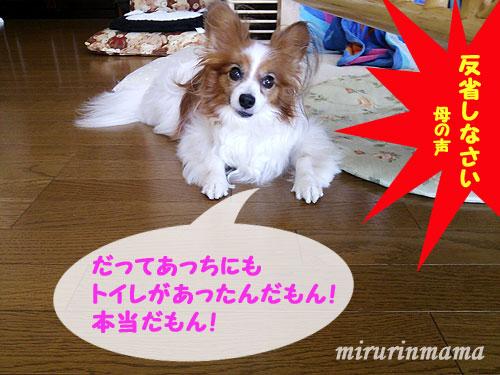 20150723_3.jpg