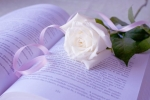rose83.jpg