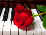 rose92.jpg