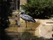 20150624上野動物園ハシビロコウ4