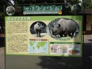 20150624上野動物園ヒガシクロサイ3