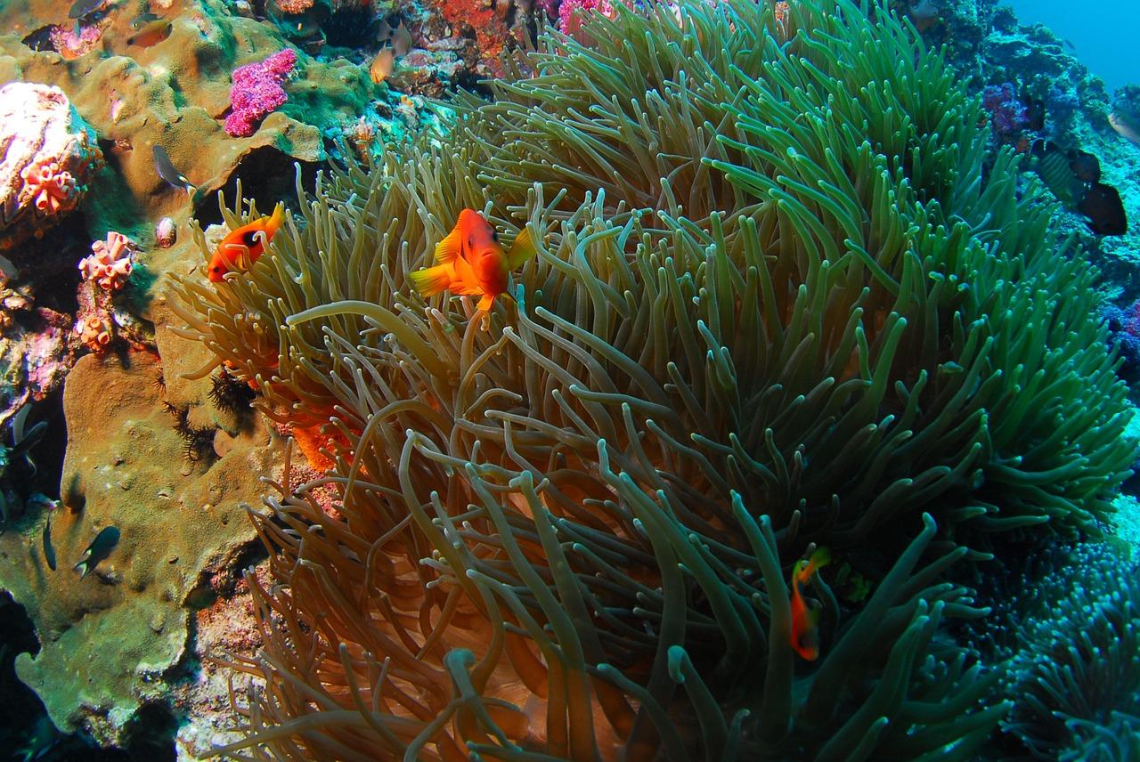 宮古島,沖縄,キャバクラ,ブログ画像,サンゴ礁