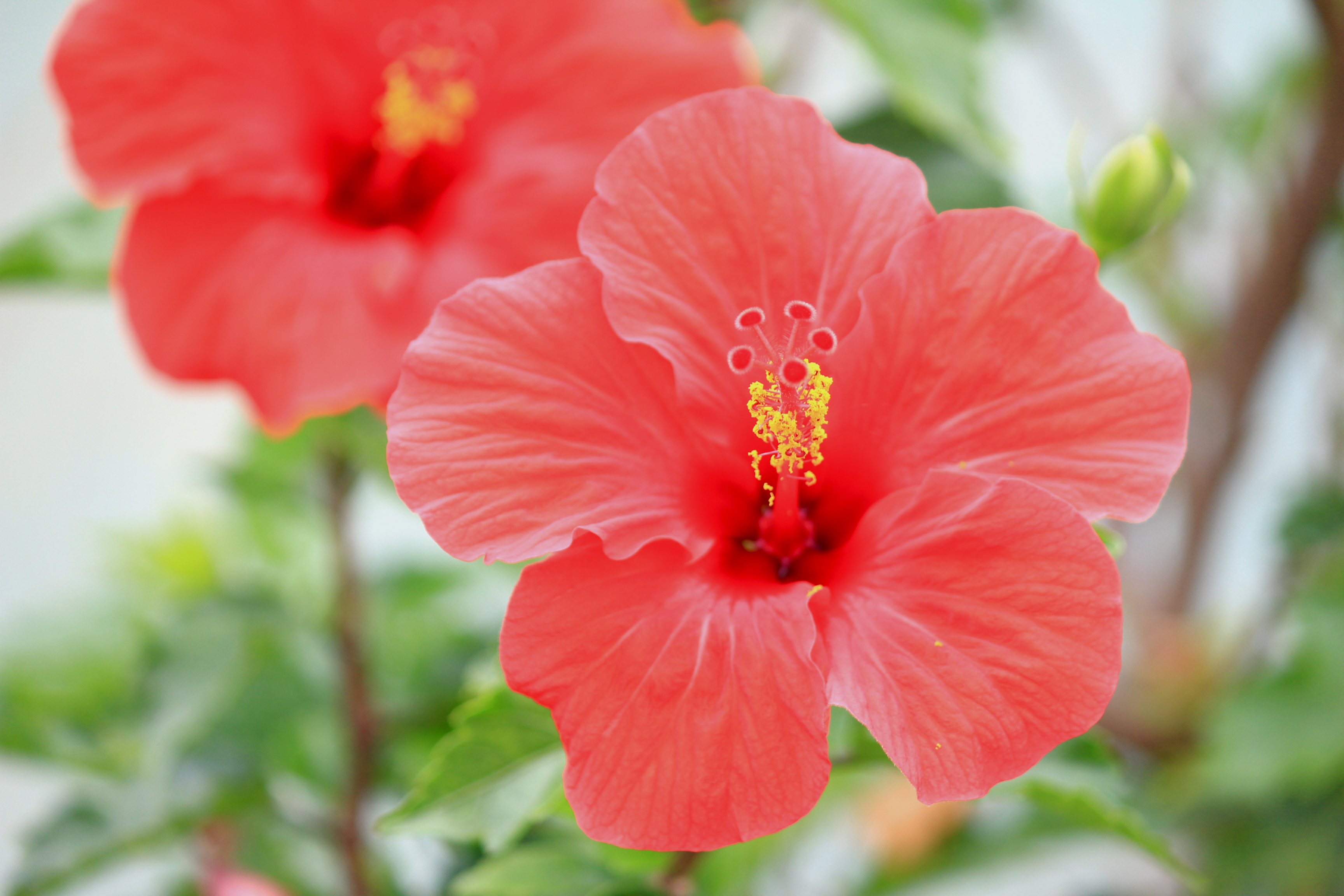 宮古島,沖縄,キャバクラ,観光,リゾート,自然