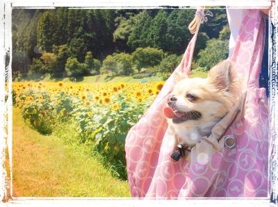PhotoFunia-1438957446.jpg